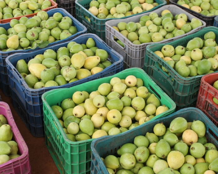 http://www.infonet.com.br/sysinfonet/images/secretarias/economia/grande-goiaba_cohidro.jpg