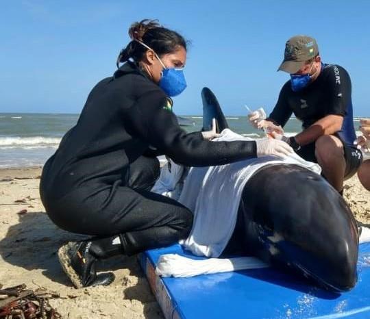 Golfinho é resgatado após encalhar no litoral de Sergipe